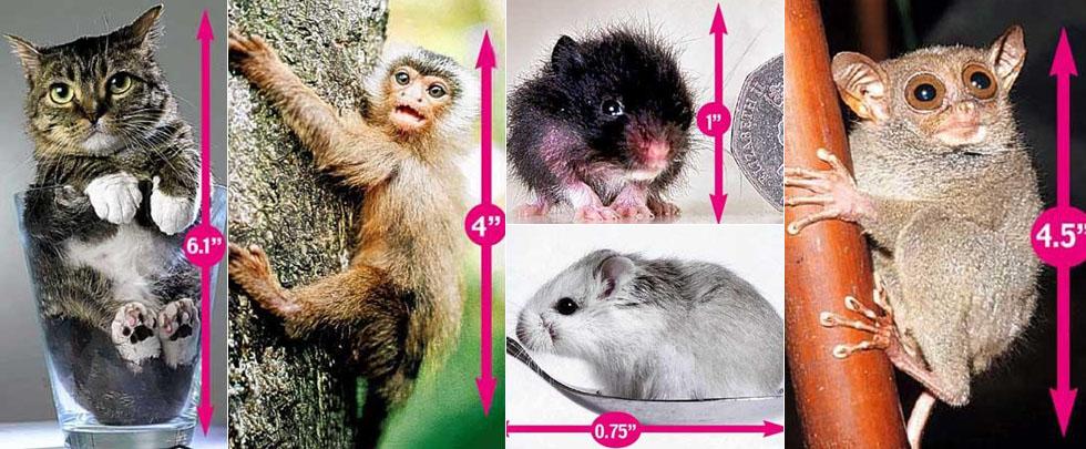 体亮相图小可爱动物图