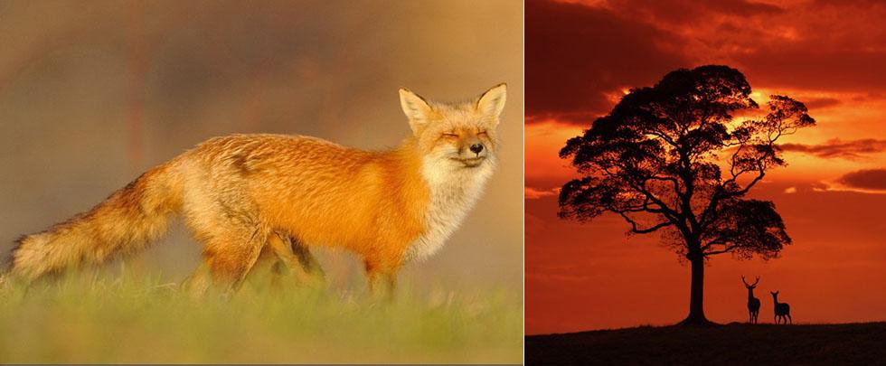 充满意境的野生动物摄影