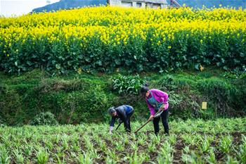 貴州六枝:春耕備耕忙
