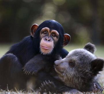 小萝莉被迫与猩猩说拜拜 亲昵嬉水照受追捧 动物吃货萌态:松鼠偷吃