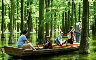 武漢新洲水上森林風景如畫