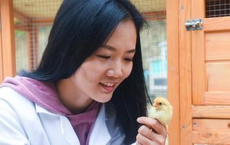女留學生返鄉創業養土雞