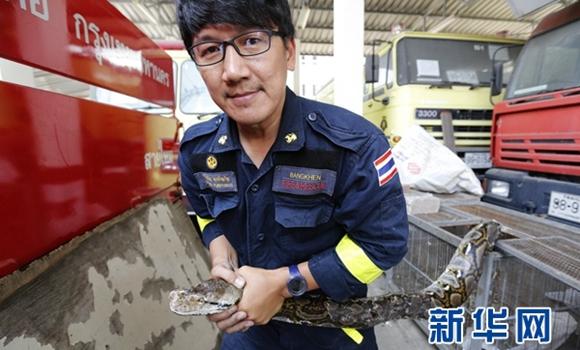 泰國曼谷野蛇泛濫成災 消防員捉蛇次數多過救火