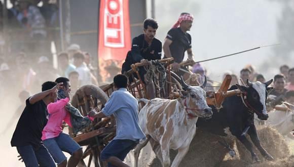 泰國佛丕府舉行年度牛車大賽 場面激烈