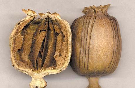 全國多地現罌粟殼入食品調料事件