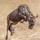非洲角馬渡馬拉河