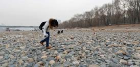 """兰州:黄河""""露底""""引市民捡石散步(高清组图)"""