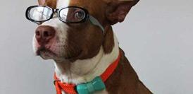 """狗狗的""""运动手环""""啥样?"""