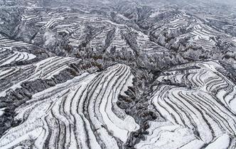 黃土高原降春雪 黑白分明如畫卷