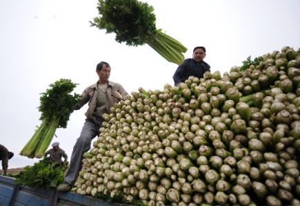 劉永富:發展産業脫貧仍是精準扶貧、精準脫貧主攻方向