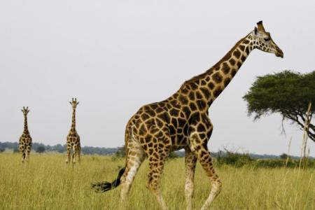社會各界動物保護意識不斷提高