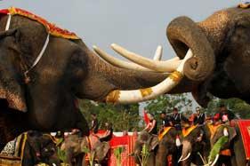 泰國慶祝大象日