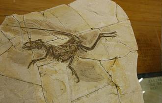 上海自然博物館獲贈十件古生物化石