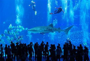 潛水戲鯨鯊