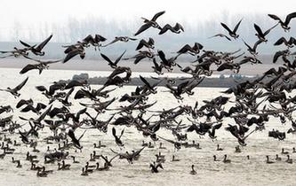 湿地好生态 候鸟如约归