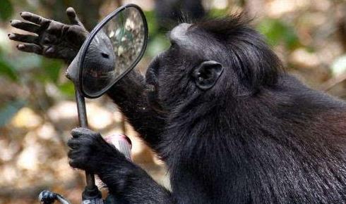"""爱美之心""""猴""""皆有之"""