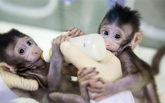 重大突破!兩只克隆猴在中國誕生