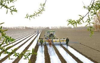 新疆塔裏木:棉花播種忙