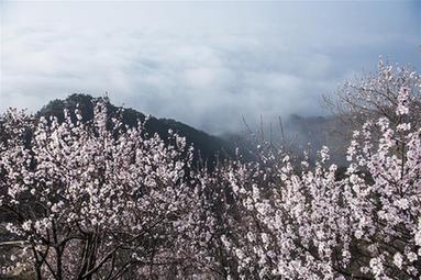 雲海伴山花