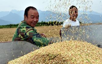 陜西:1590萬畝小麥開始全面收割