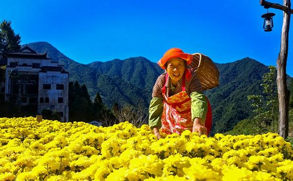 秋收的中國,你想象不到的美!但更美的是……