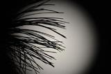 中秋佳节 用科学的目光赏月