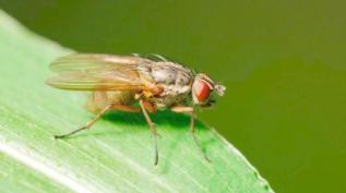 苍蝇比你反应快,或因看世界的方法更简单