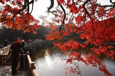 江西廬山:楓葉美景迎客來