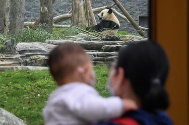 武漢動物園有序恢復開放