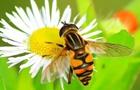 联合国粮农组织呼吁保护蜜蜂
