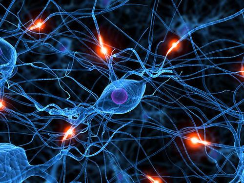 """罗彻斯特大学德尔蒙特神经科学研究所:解码人类记忆中特有神经""""指纹"""""""