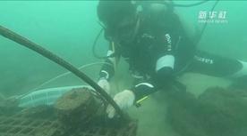 """看!他们在海底""""种""""珊瑚"""