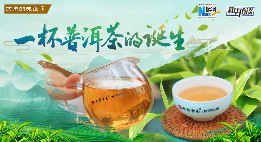【四季的味道V】一杯普洱茶的誕生