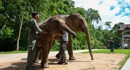 探访云南亚洲象栖息地