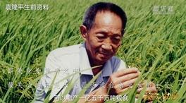袁隆平:稻浪飄香 禾下乘涼