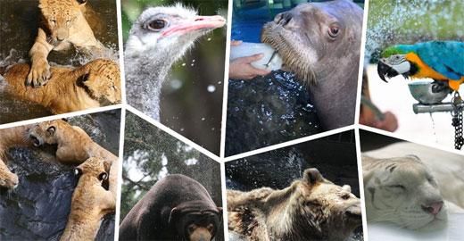至中国野生动物保护协会