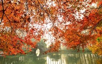 杭州:满城枫情