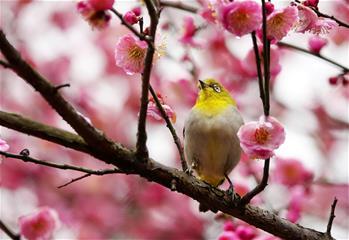 梅花開 引鳥來