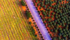 春色滿園 航拍江西新余現代農業基地如童話世界