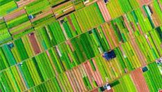 航拍海口農田色彩斑斕猶如馬賽克