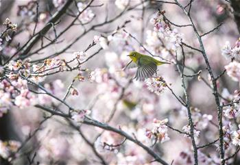 春鳥鬧花枝