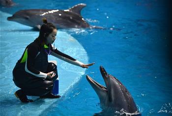 """""""海豚姑娘""""的藍色追夢之旅"""