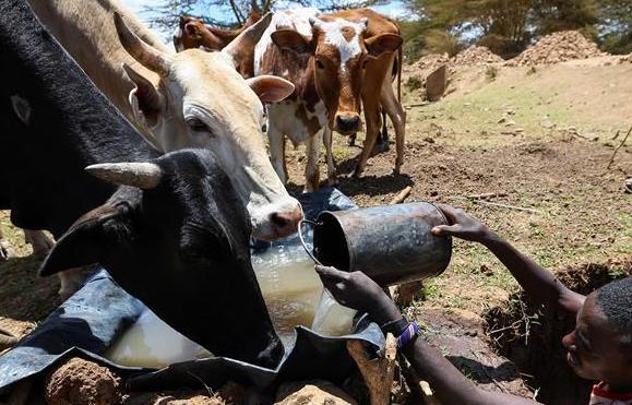肯尼亞遭遇嚴重幹旱