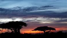 動物的樂園——安博塞利國家公園