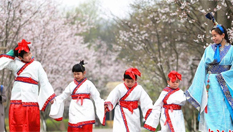 常州古裝萌娃櫻花樹下學傳統禮儀