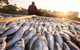 鄱陽湖畔漁民曬魚忙