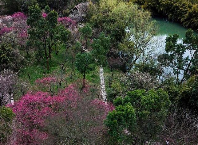 杭州西溪濕地:曲水尋梅 美不勝收
