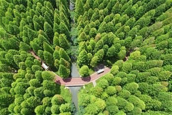江蘇東臺:森林氧吧醉遊人
