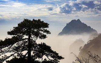 安徽黃山秋意正濃 雲海縹緲層林盡染