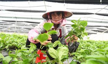 發展水果種植 助力脫貧攻堅